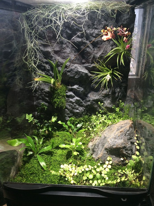 Diy Frog Terrarium Home Design