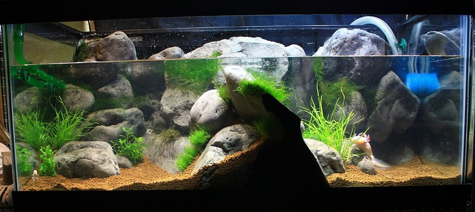 Diy tutorials for Aquarium waterfall decoration